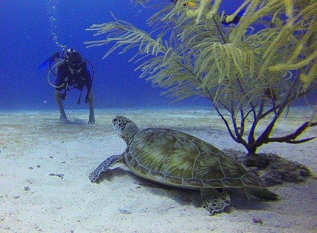 želva a potápěč.jpg